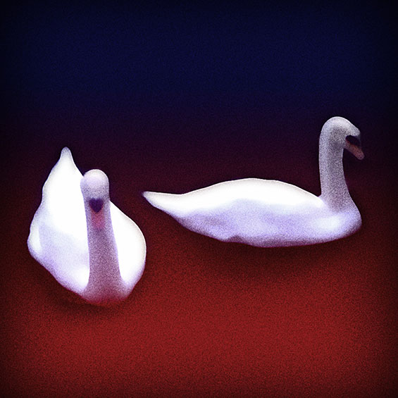 Two Swans in a Lake of Blood   Description of a Dream