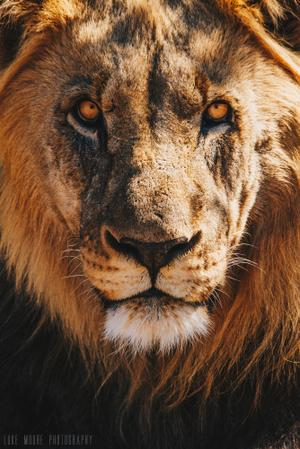 Thumbnail for Wildlife