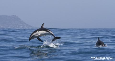 Dolphins at the Beach