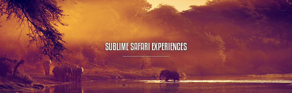 Sublime Safari Experiences