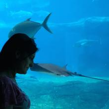Hayley McLellan at her workplace, the Two Oceans Aquarium in Cape Town