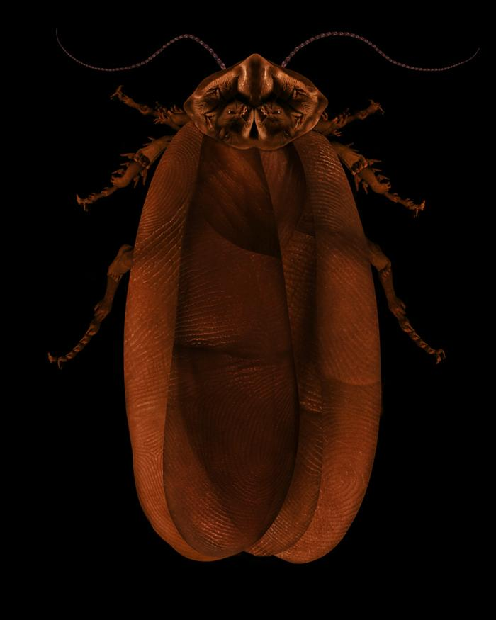 Cockroach (self portrait), 2006-07