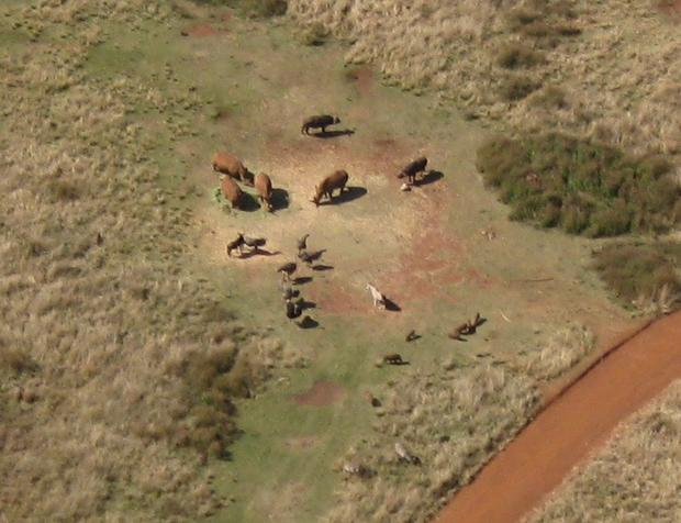 Aerial Photograph Rhino's South Africa