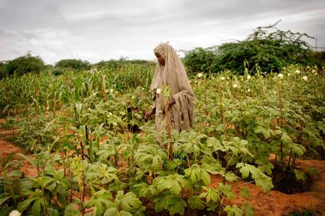 thumbnail for A women tends to the crops on a community farm in Bosaso, Somalia.