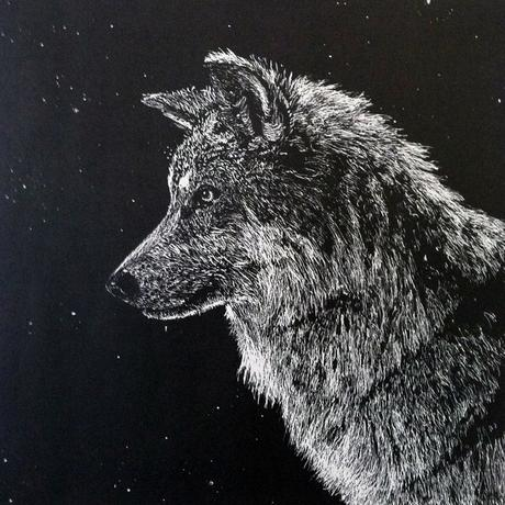 thumbnail for Mexican Gray Wolf (Canis lupis bailey) _EW_est. pop. 340