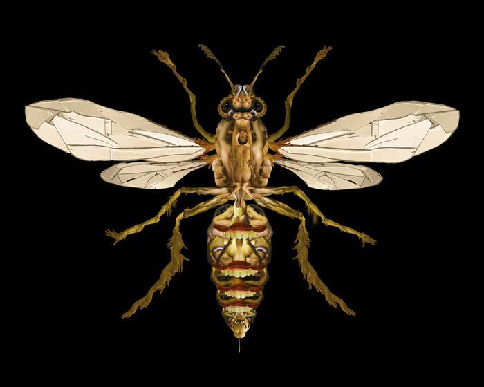 Giant Japanese Hornet (portrait of Darlene) 2006
