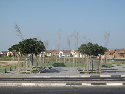 spine-road---street-corner-planting.jpg