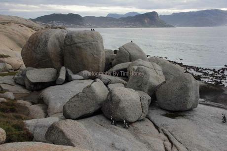 Boulders Beach Boulders, Cape Peninsula [38038]