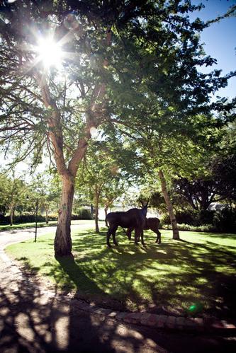 Thumbnail for Lisa & Steve wedding South Africa 2012