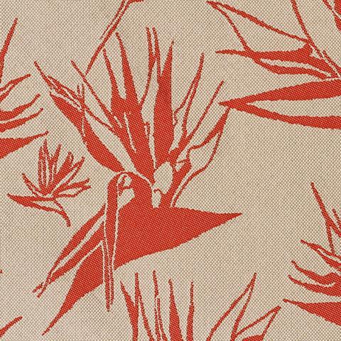 Strelitzia - Tangerine