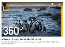 Thumbnail for National Geographic 360 Video