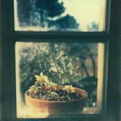 plante1.jpg