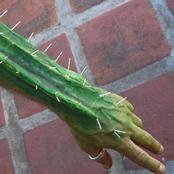cactus1a.jpg