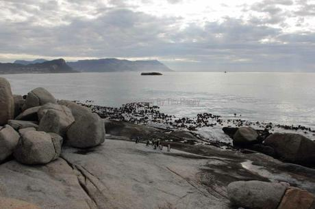 Boulders Beach with Penguins, Cape Peninsula [48033]