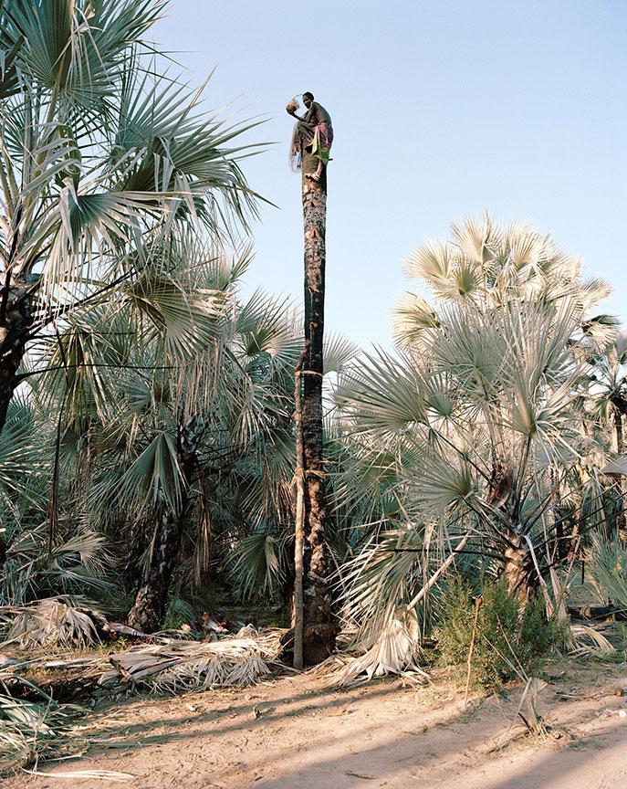 Portrait 2, Palm Wine Collectors, Kunene Region, Namibia, 2015