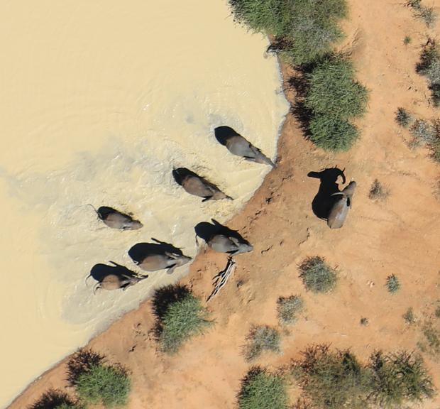 Elephants taking a swim at Mongena in Dinokeng Reserve South Africa