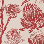 Protea - Red