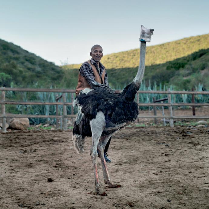 Niklaas Ockers, an ostrich Jockey. Oudtshoorn, Western Cape,28 July 2011