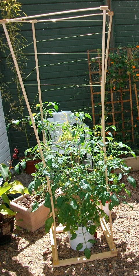 Building Wooden Tomato Cages Neilens Occasional Perch