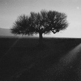 thumbnail for Desert Road - Yosrie Jacobs