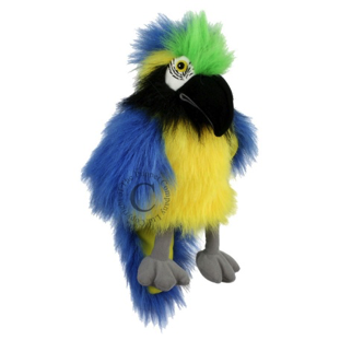 Baby Bird: Blue & Gold macaw Pc4202