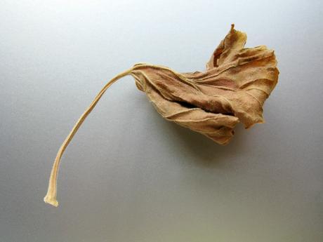 thumbnail for Leaf study, 2010