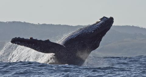 Whales CapeTown