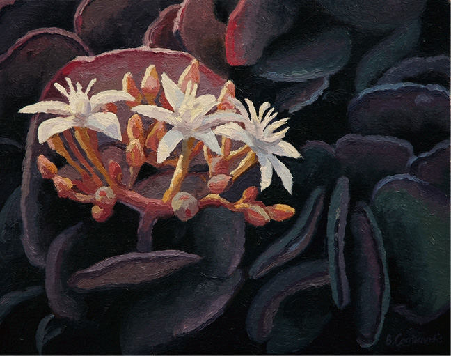 Flowering succulent - SOLD