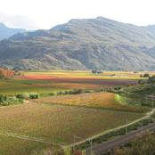 Autumn in the winelands.
