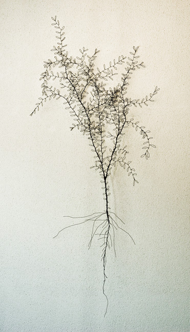 Fine leaved plant - SOLD