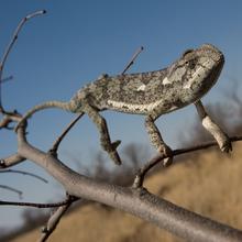Thumbnail for Portfolio - wildlife