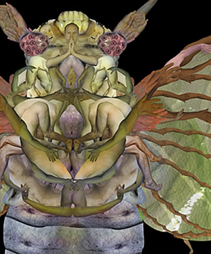 detail of Cicada