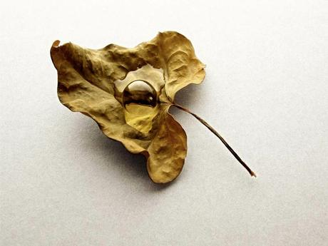 thumbnail for Waterball on leaf, 2010