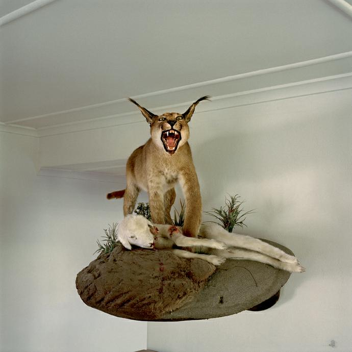 Trophy taxidermied by Fransie van der Merwe, a sheep farmer. Waterkrans farm, Richmond, Northern