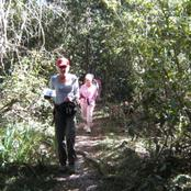 Walking in  the Tsitsikamma forest on the Garden Route.