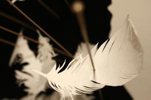 Thumbnail for Feathers & Ink