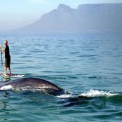 whales_at_capetown.jpg
