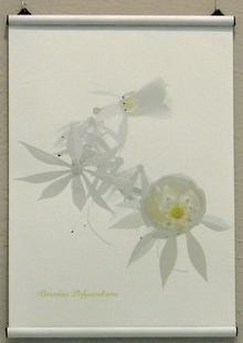 Thumbnail for  botanical drawings - plastic organic