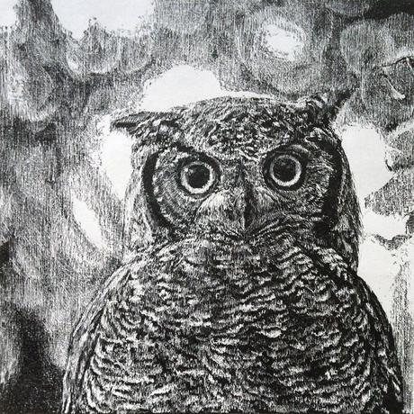 thumbnail for Northern Spotted Owl (Strix occidentalis caurina)_NT_est. pop. 3000-5000 pairs