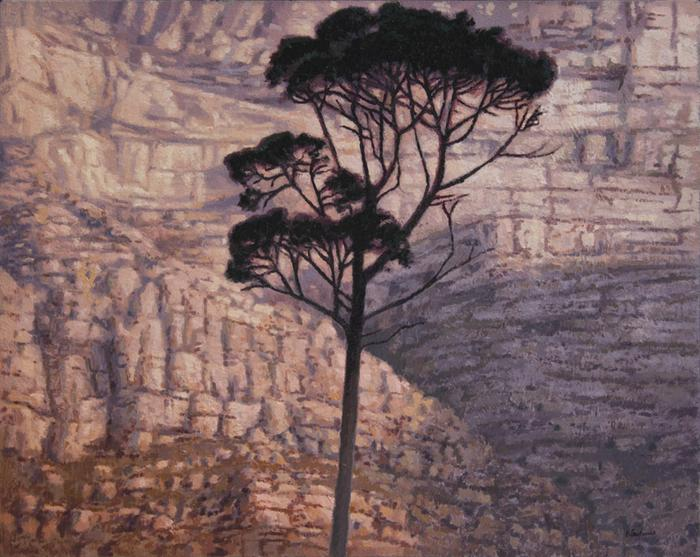 Stone pine in front of Table Mountain - SOLD