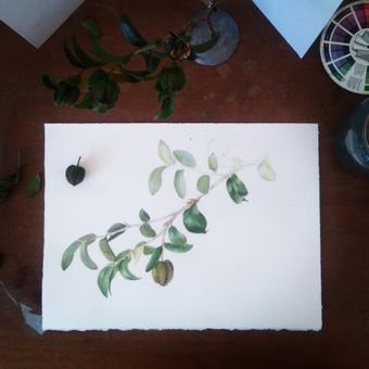 thumbnail for Lesson on Leaves