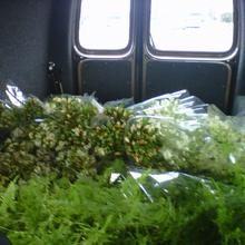Transporting Derryn's flower selection home