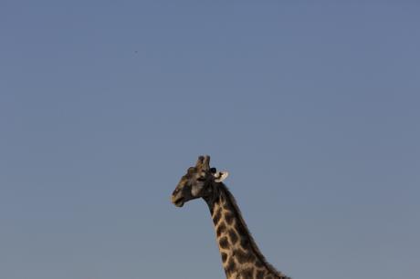 thumbnail for Pilanesberg, South Africa, 2015