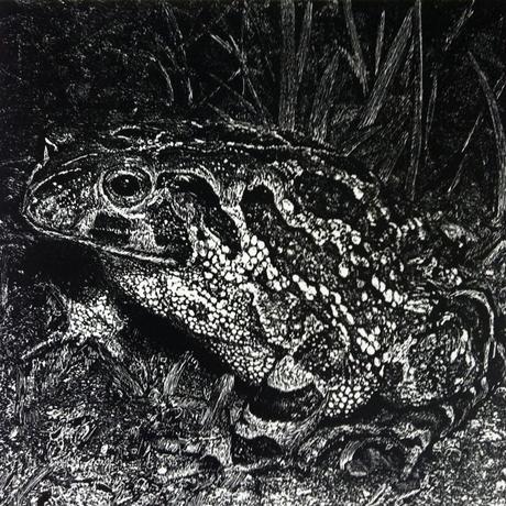 thumbnail for Western Leopard Toad (Amietophrynus pantherinus)_EN