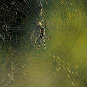 spider__9870.jpg