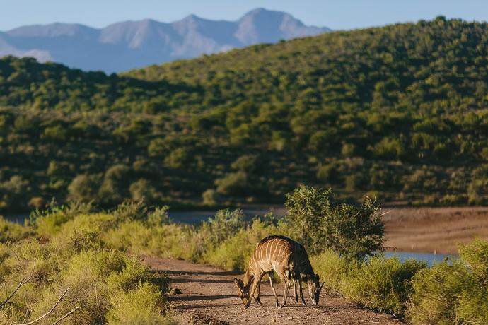 African Karoo Wedding - Anthony & Megan