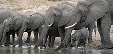 Live Wildlife Webcam Djuma