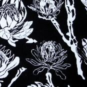 African Protea col. black