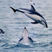 dolphin_0023.jpg