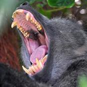 baboon_8357.jpg